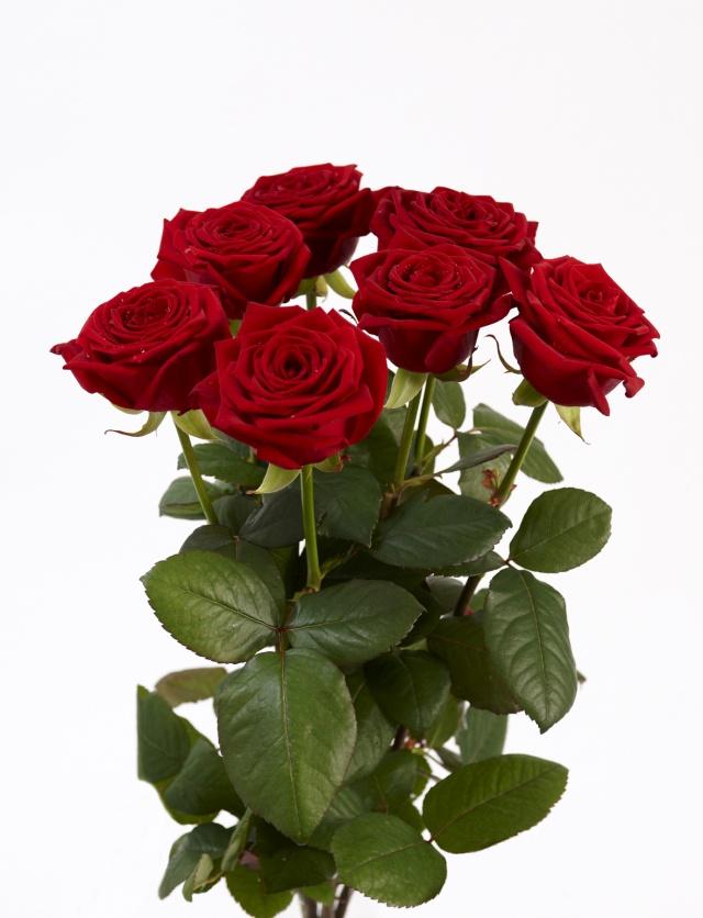 7 Røde roser