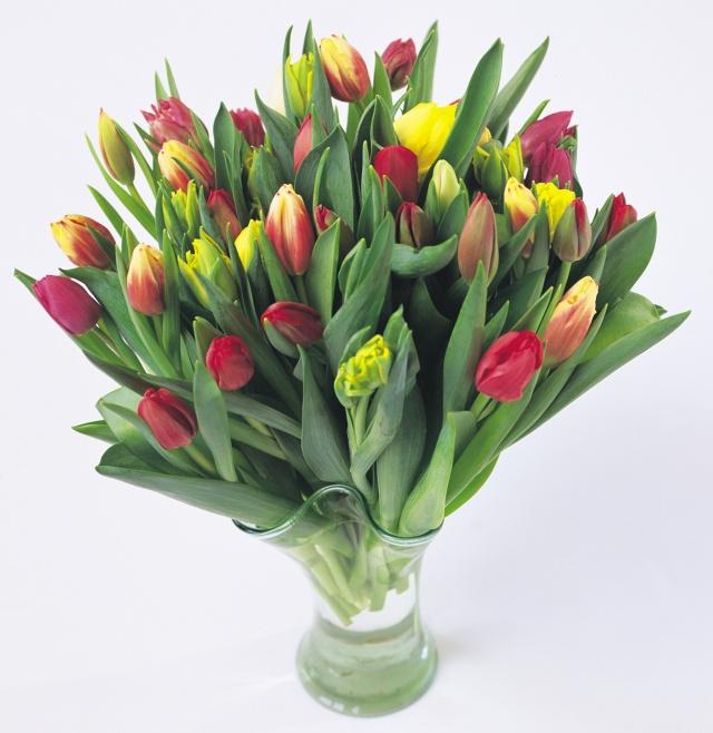 10 stk tulipaner med pynt