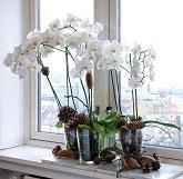 Orkide med potte og pynt