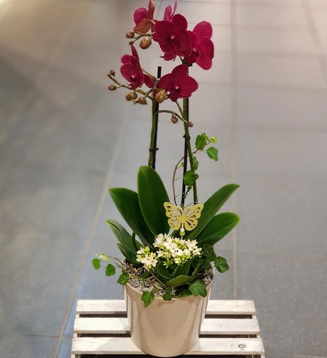Sammenplantning med orkide