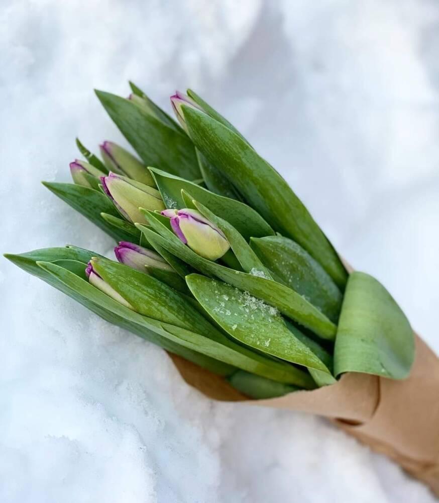 20 tulipaner til Mor