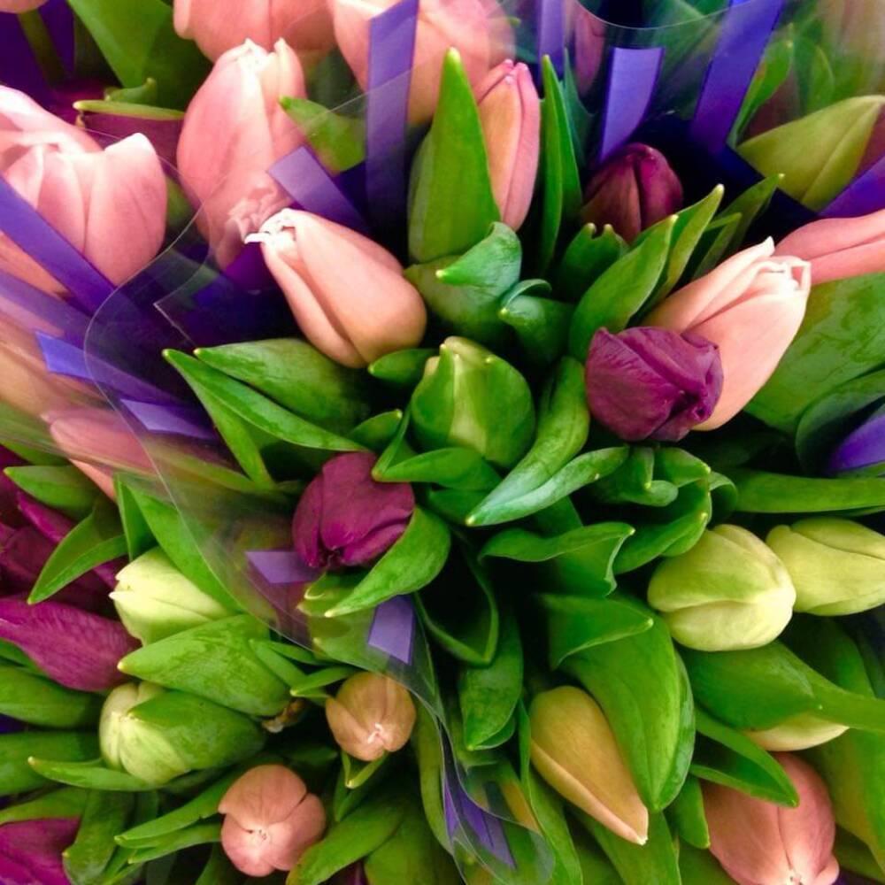 30 tulipaner