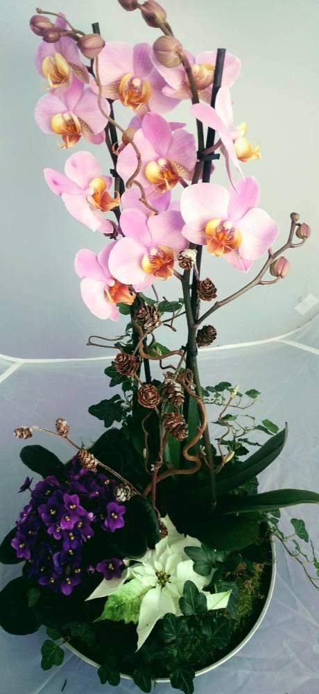 Orkide nyttårs gruppe