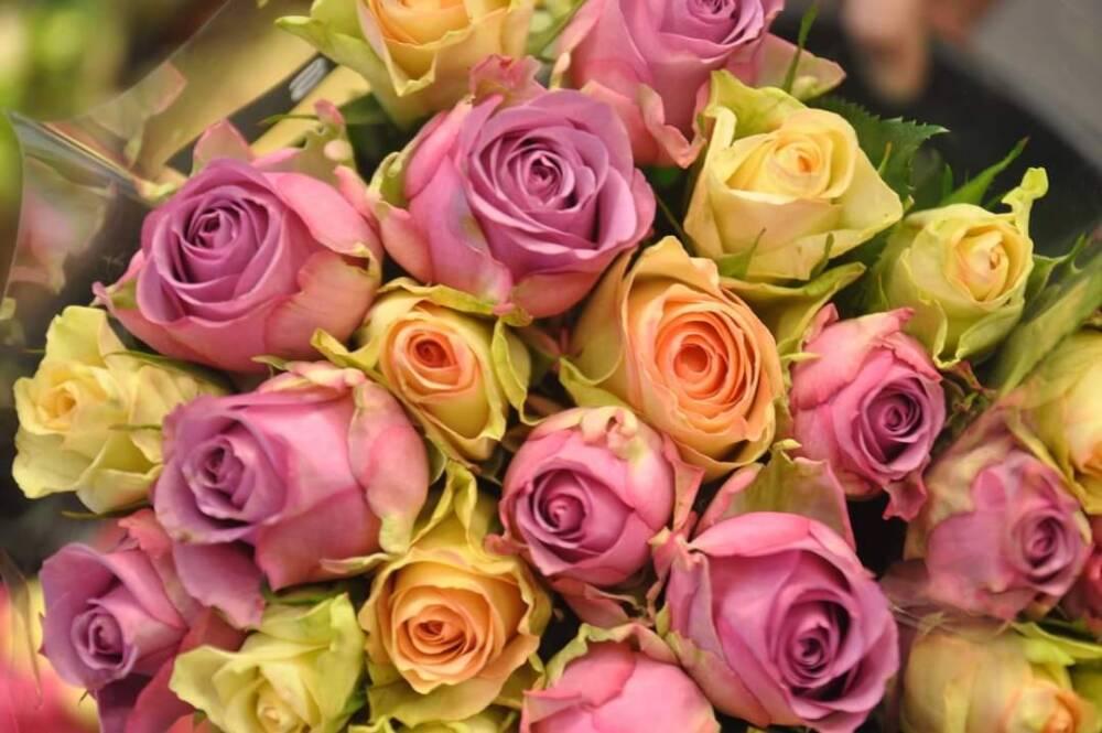 20 roser gyldne farger