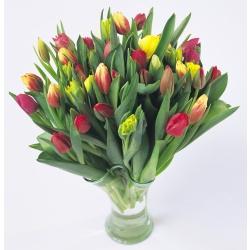 20 pkn Tulipaner med pynt